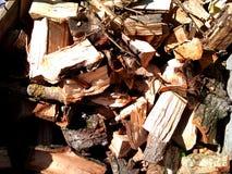 Pila seca de la leña de árboles derribados Fotos de archivo libres de regalías