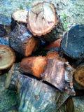 Pila seca del tocón de árboles de madera reducidos Fotos de archivo