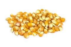 Pila secada aislada del maíz Imagen de archivo