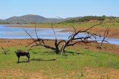 Pilanesberg Fotografia Stock