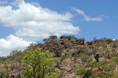 Pilanesberg National Park Stock Photography