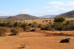 Pilanesberg national park Royalty Free Stock Photos