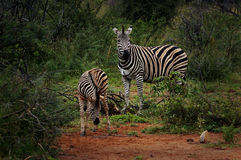Pilanesberg National Park Stock Photo