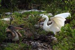 Pilar aviar Fotos de archivo