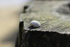Pilar de madera de la playa de Sandy Foto de archivo libre de regalías