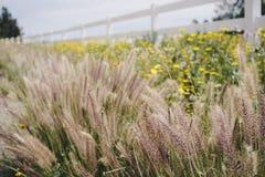 Pilar med blommafältet och vitstaketet fotografering för bildbyråer