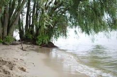 Pilar på havsstranden Trees i vatten Regnig dag för sommar Royaltyfria Foton