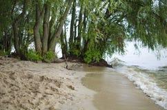 Pilar på havsstranden Trees i vatten Regnig dag för sommar Royaltyfri Foto