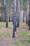 Pilar på trädet Arkivfoto