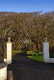 Pilares blancos y calzada que llevan en Forrest Imagenes de archivo