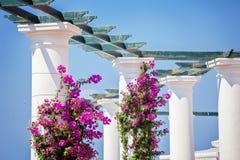 Pilares con la buganvilla en la isla de Capri Imagen de archivo