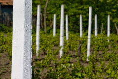 Pilares en viñedo fotografía de archivo