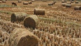Pilas cosechadas y rodadas del heno en un campo Fotografía de archivo