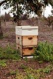 Pilas de colmenas de la abeja del langsroth Fotos de archivo libres de regalías
