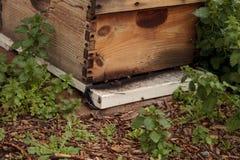 Pilas de colmenas de la abeja del langsroth Imagenes de archivo