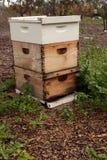 Pilas de colmenas de la abeja del langsroth Foto de archivo libre de regalías