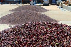 Pilas de granos de café Fotos de archivo libres de regalías