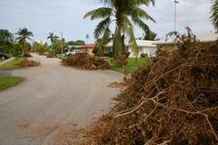 Pilas de huracán Irma de las ramas de árbol Fotografía de archivo libre de regalías