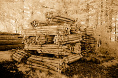 Pilas de la madera Imagen de archivo libre de regalías