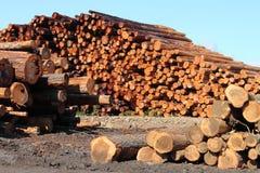 Pilas de madera Fotografía de archivo libre de regalías