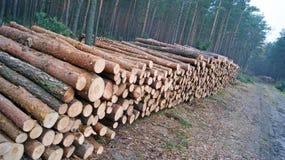 Pilas de madera Foto de archivo libre de regalías