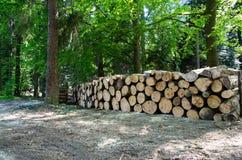 Pilas de madera a lo largo del camino en bosque Imágenes de archivo libres de regalías