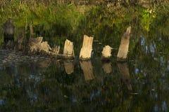 Pilas de madera viejas en el agua Foto de archivo