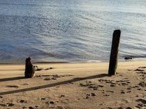 Pilas de madera viejas en la playa arenosa del río Imágenes de archivo libres de regalías