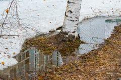 Pilas de nieve de fusión sucia en parque del abedul en primavera, fotografía de archivo
