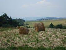 Pilas de paja en un campo delante del bosque Foto de archivo libre de regalías