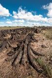 Pilas de pantano de turba en un campo fotografía de archivo libre de regalías