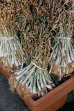 Pilas de plantas del ajo en venta en la exhibición fotos de archivo