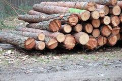 Pilas de registración del registro del pino Foto de archivo