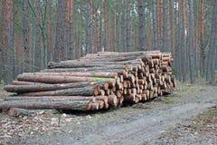 Pilas de registración del registro del pino Foto de archivo libre de regalías