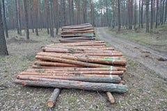 Pilas de registración del registro del pino Imagen de archivo