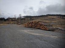 Pilas de tocones en la montaña de Biskupia Kopa fotografía de archivo