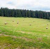 Pilas del heno dispersadas sobre prado herboso verde Fotos de archivo