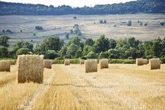 Pilas del heno en un campo cosechado Imágenes de archivo libres de regalías