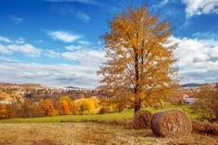 Pilas del heno y árbol del al Imagen de archivo libre de regalías