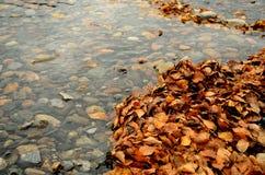 Pilas enormes de hoja amarilla y marrón del abedul en corriente del río Foto de archivo