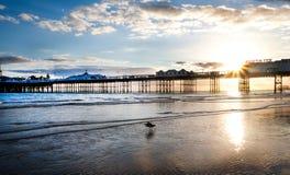 Pilastro di Brighton al tramonto Immagine Stock Libera da Diritti