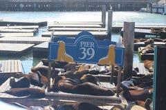 Pilastro 39, San Francisco Fotografie Stock