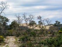 Pilat森林和沙丘最高的沙丘在欧洲,阿卡雄湾,阿基旃,法国,大西洋 免版税库存照片