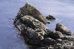 Pilbåge Fiddle Rock, Portknockie, Skottland royaltyfria bilder