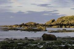 Pilbåge Fiddle Rock, Portknockie, Skottland arkivbild