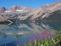 Pilbåge sjö på Jasper National Park Royaltyfri Fotografi