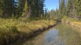 Pilbågedalbanff flod Arkivbilder