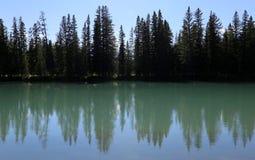 PilbågeflodTräd-linje Arkivfoto