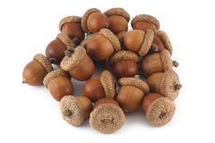 Pile of acorns Stock Photography