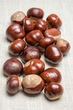 Pile of aesculus hippocastanum or conker tree nuts on tablecloth. Top view.  stock images